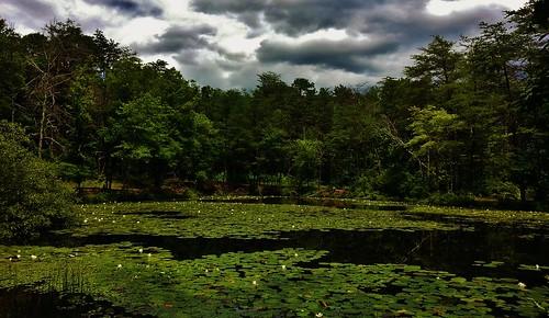 Rieve's Pond Summer Scenery