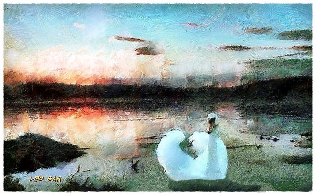 Swan Lake - Lago de los Cisnes