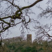Dunster Folly by Matt Bigwood