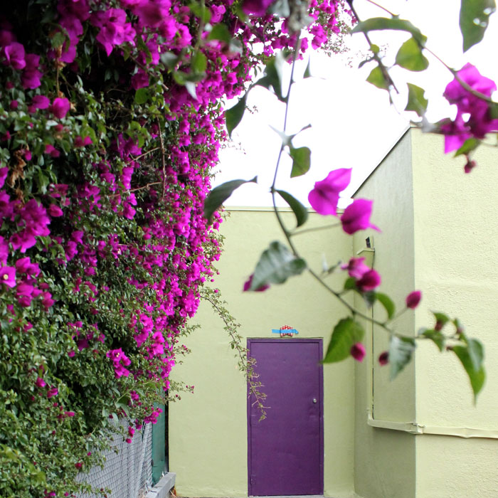 purple and green photography