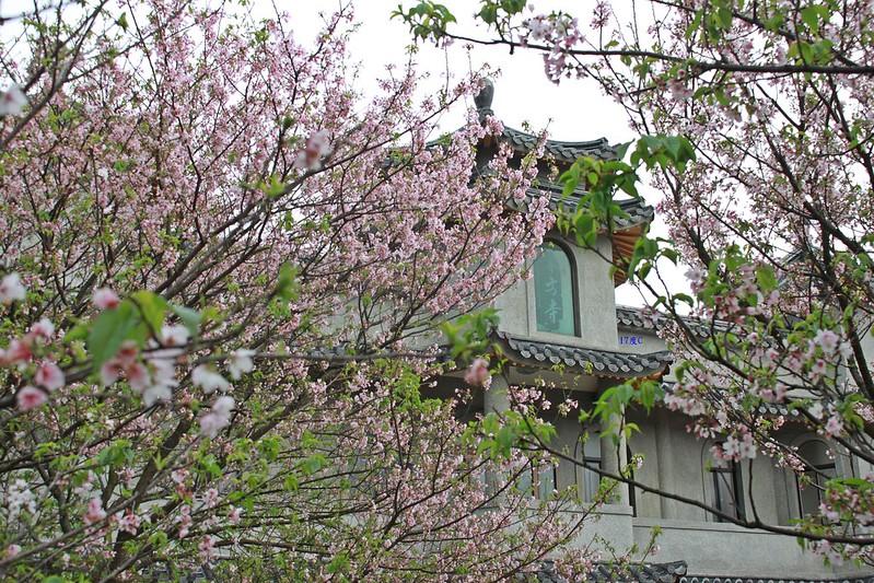 17度C在地景點春季推薦-東方室-櫻花 (3)