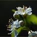 Tiny Tree Blooms by Karen McQuilkin