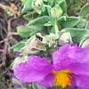 Petit papillon aux grandes antennes...