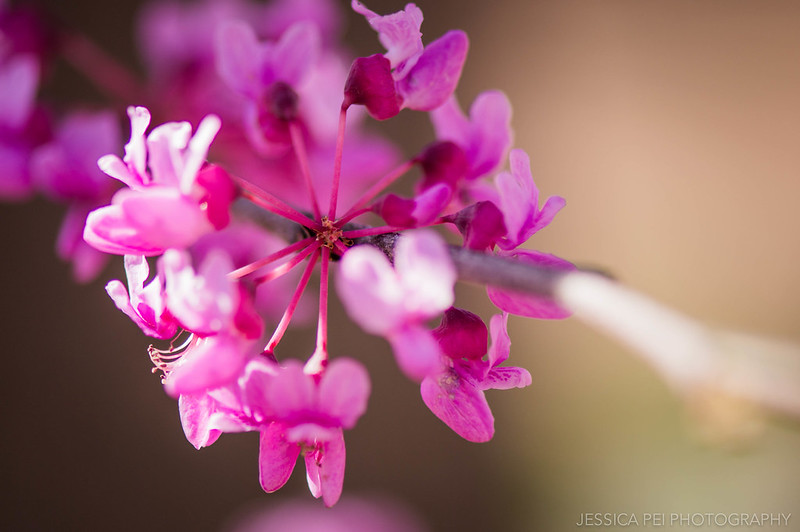 Bunch of Pink Flowers Macro Nature Photography