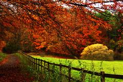 Chopwell Woods
