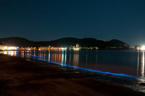 夜光虫@逗子海岸