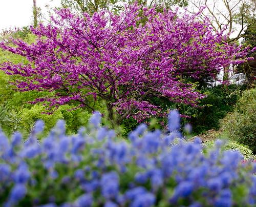 flowers france primavera colors garden hotel spring colours cyan magenta frança oc aude francia garten carcassonne languedoc carcassona jardín jardí occitania cymk 卡尔卡松 カルカソンヌ каркасон