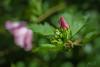 Flower after rain by JasonKChen