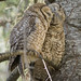 Even owls enjoy a little squeezins by Mouser NerdBot