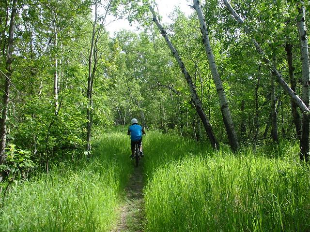 Biking forest, Sony DSC-V3