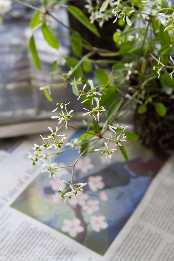 blooms to last all summer | reading my tea leaves