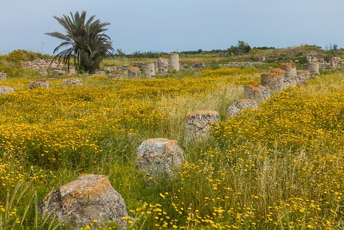greek ancient roman ruin cyprus ancientcivilization constantia famagusta salamis archaeolgy oldruin turkishrepublicofnorthcyprus rhkamen