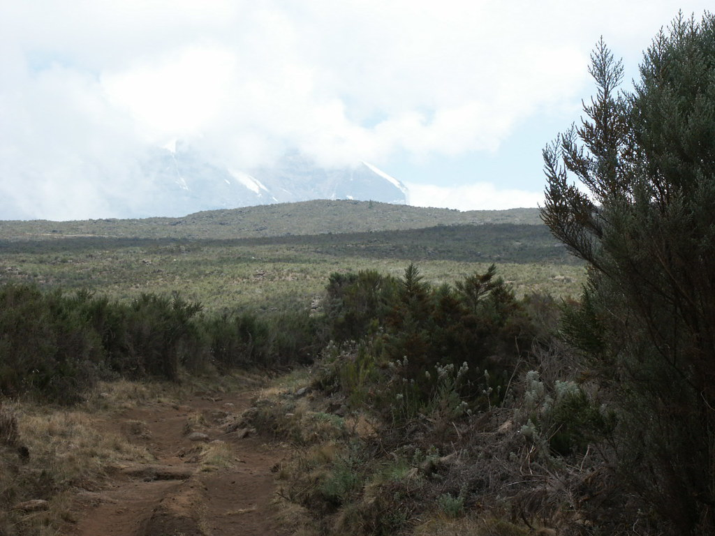 The dusty track up to the Shira Plateau, with Kibo on the horizon.