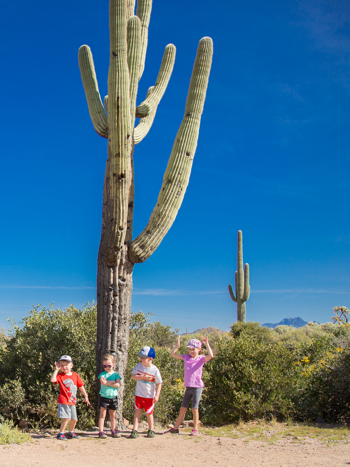 2015-03-12 Arizona-6413.jpg