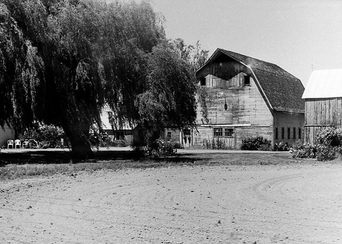 Barn and Willow Tree, Mount Vernon, WA