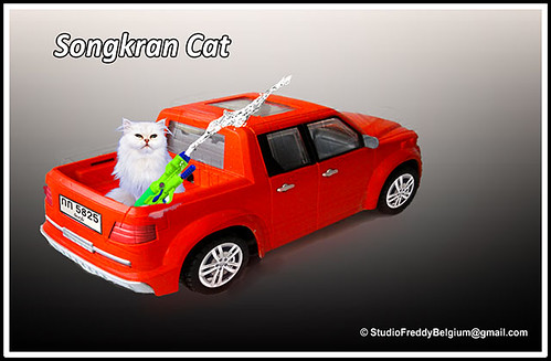 Songkran-Cat-2