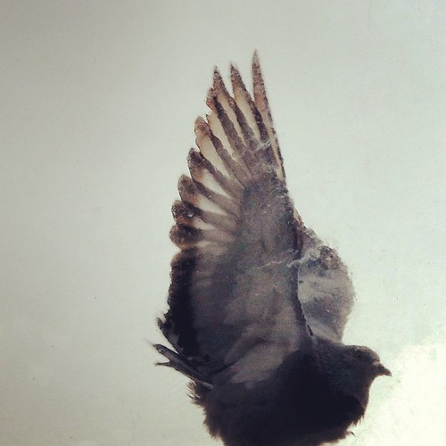 Regardez qui est venu me dire bonjour ce matin #bird #instabird #animal #tagsforlikes #nature #birdlovers #instacool #instagood #instagram #instalike #photooftheday #ipod #photo #igers #igersfrance #igersgironde #goodmorning #goodmoments #bonjour