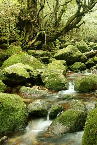 japan kagoshima 日本 yakushima 屋久島 鹿児島 日本の景色 白谷雲水峡 japanesenature 日本の自然