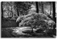 Japanese Gardens in B/W