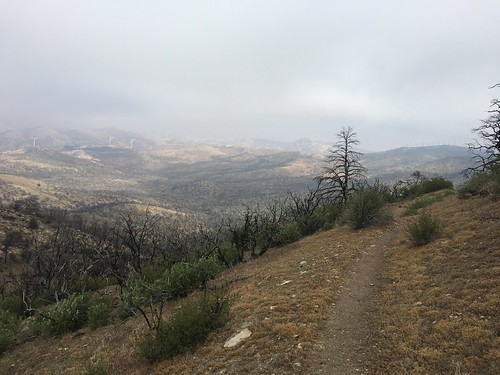 PCT: Day 44