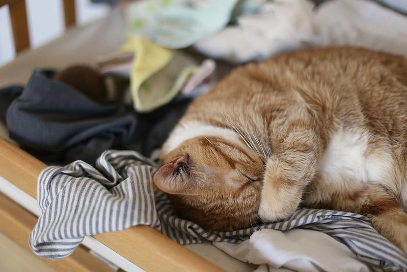 sleeping on laundry
