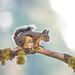 """Got nuts?"" - DROH by morrobayrich"