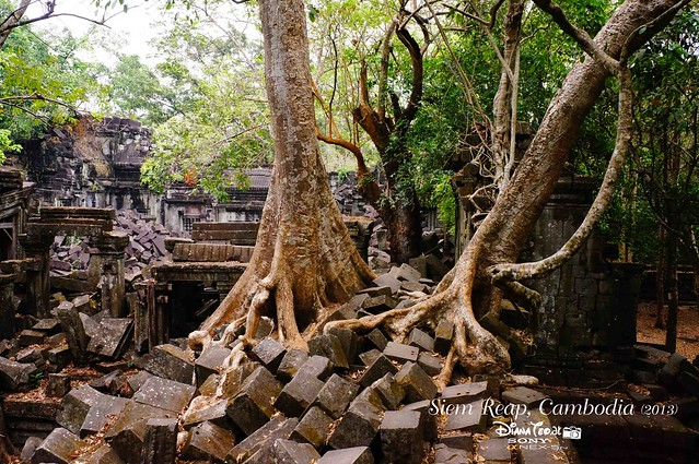 Siem Reap, Cambodia Day 5 - Beng Mealea 05
