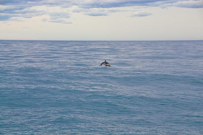 a dolphin!