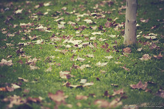 20141019_igg_alcorcon-4413