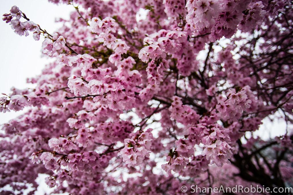 2015-04-09-20150409(Canon EOS 6D)-00019