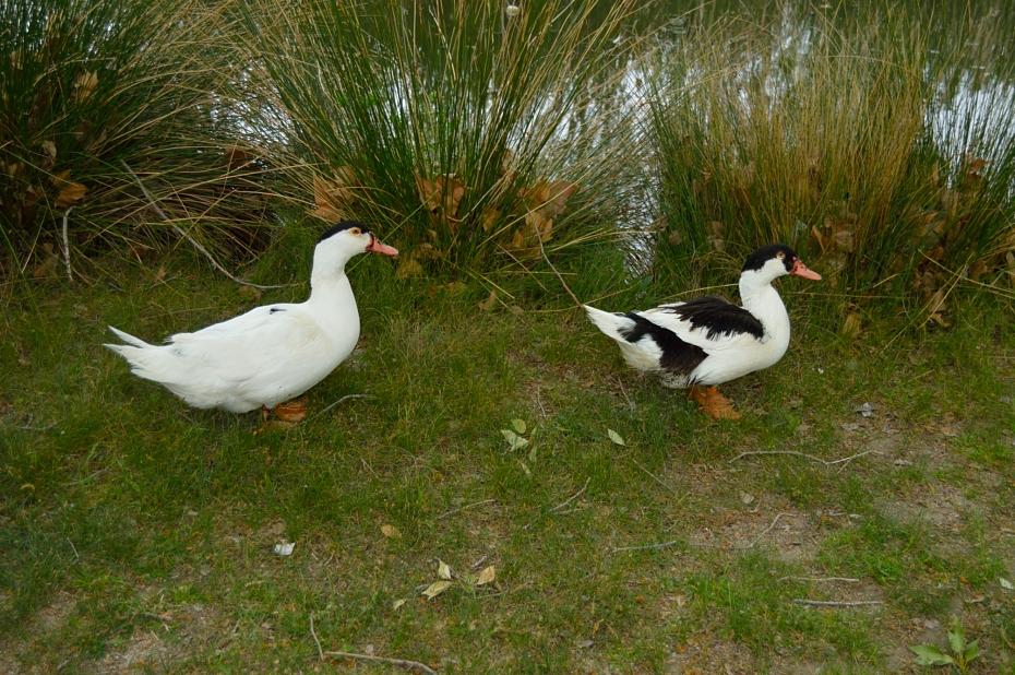 lara-vazquez-mad-lula-ducks-chapinería