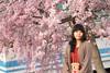 Photo:IMG_0072 枝垂桜 By vicjuan