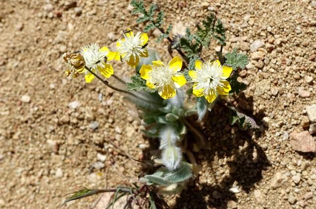 Mystery flower, m548