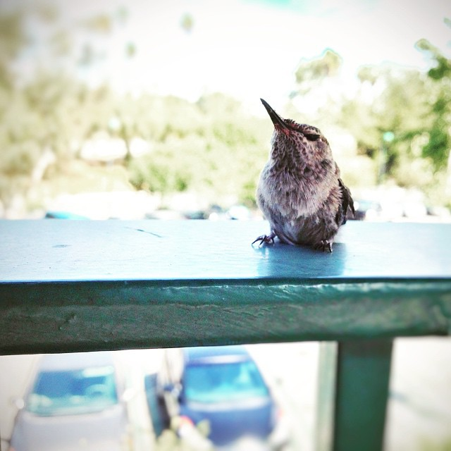 Made a new friend today while waiting on the train. #MyDayInLA #TheBoids #birdsofinstagram #birdie #tweety