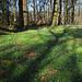 The forest floor by Lisbeth Pettersen