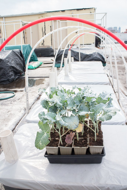 First Planting of the Year 2015 Broccoli_3