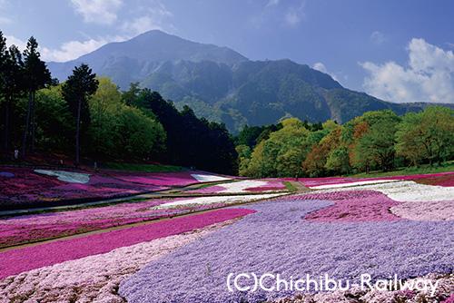 秩父羊山公園「芝桜の丘」