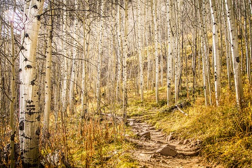 fall nature landscape scenery colorado hiking trail aspens