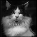~obey~the~cat~ by Delta9 Mikki - OFF- happy holidays