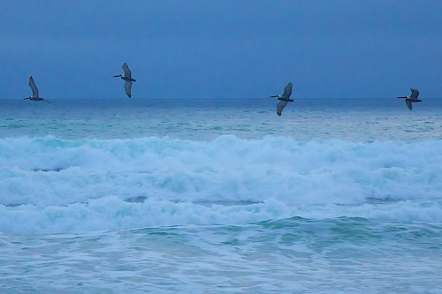 ocean beach birds sunrise dawn surf florida terns indialantic
