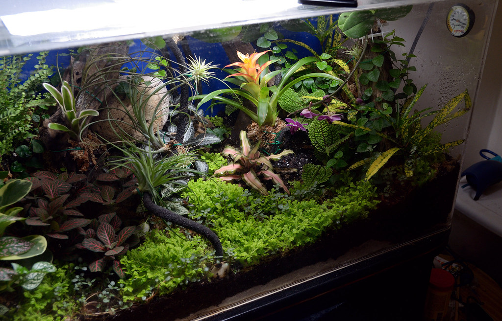 Aquatic Plants In Terrarium The Planted Tank Forum