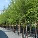 ParqueOlimpico_Londres 037