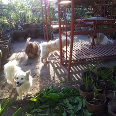 People-watching at the swing #dogs #dogphilippines