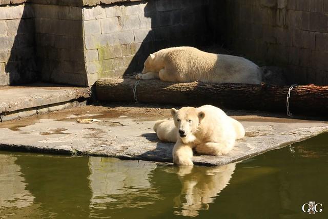 Besuch Zoo Rostock 07.05.2016165
