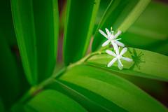 Spring Campus Flowers-8