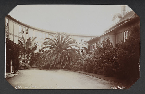 Date Palm, So. Side, Hotel Del Monte.