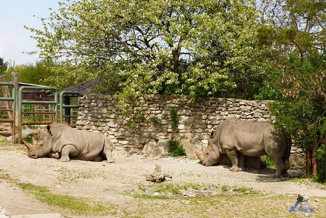 Zoo Bratislava 18.04.2015 83
