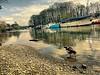 Thames Twickenham