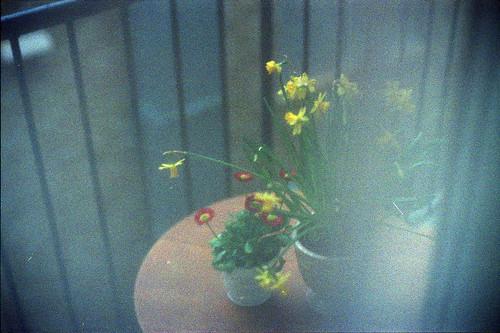「春だなぁ」 Foggy #224 かず