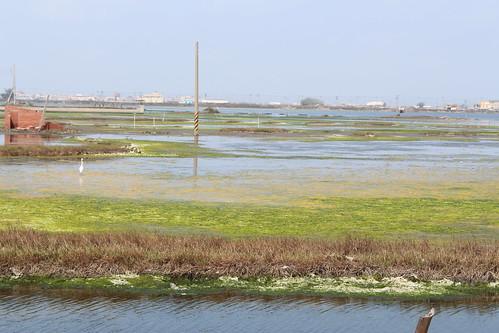 成龍溼地豐富的自然生態,沿途就可見野鳥飛舞。